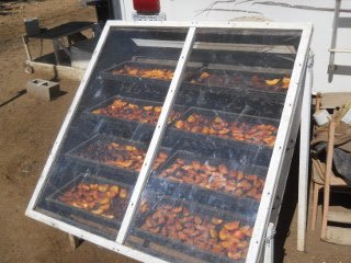 Peaches on Solar Food Dehydrator