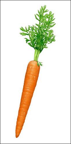 carrot[1]