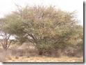 SOMALIA2 154