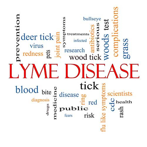 Top 5 things about Lyme Disease and its treatment