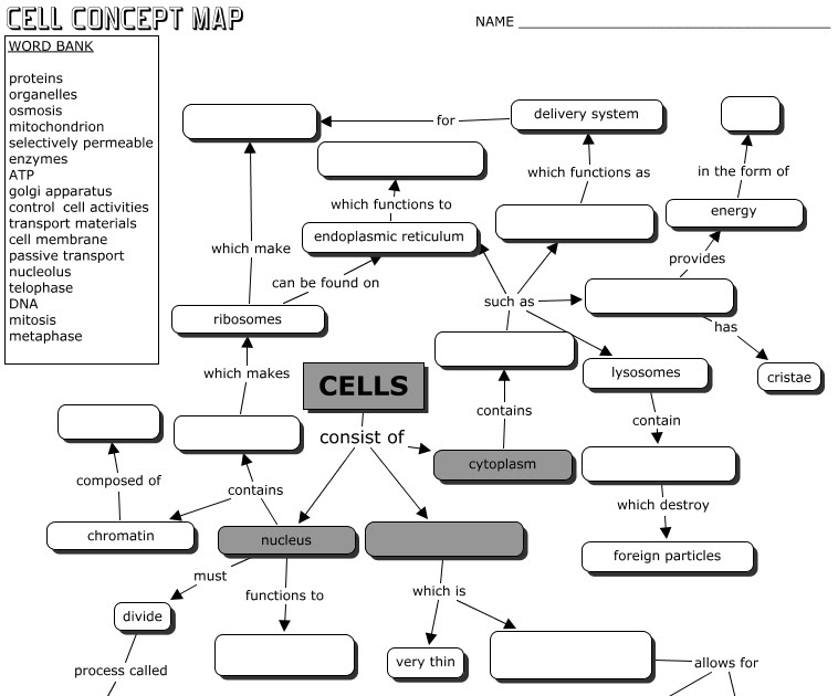 Anatomy Cell Concept Map Answer Key | Campus Map