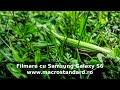 Filmare extraterestru (calugarita insecta) cu telefonul mobil Samsung Galaxy S6
