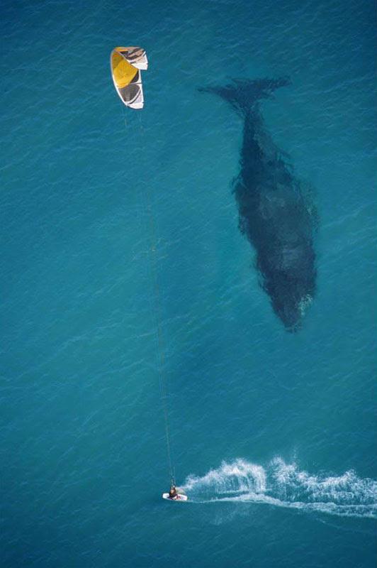 kite-surfing-με-φάλαινα-κάτω-αέρος-shot-from-above