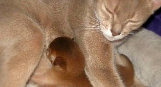 Do All Cats Have Maternal Instincts? - Petful