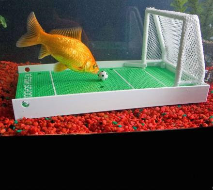Train Your Fish To Do Tricks With This Fish Agility Training Set