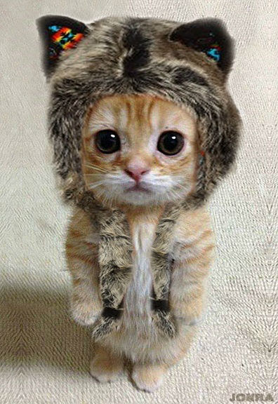 Resultado de imagen de gatos disfrazados