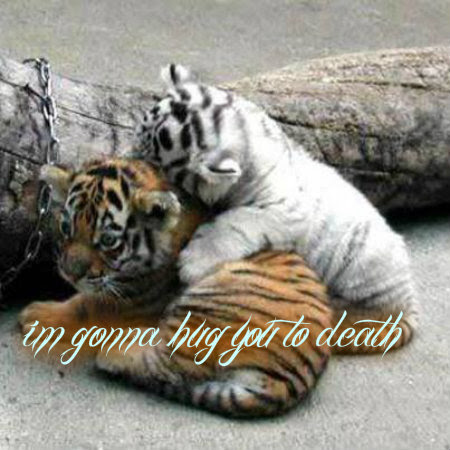 Tigers Images Free Hugs Wallpaper And Background