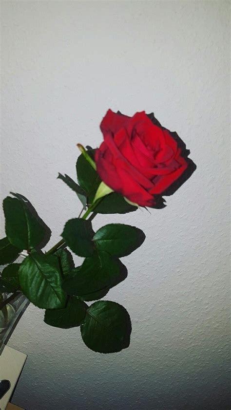 pin  afifrizkyansyah  tttt   tumblr flower