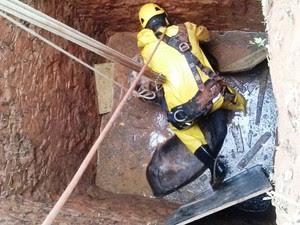 Trabalho de resgate de cavalo durou duas horas (Foto: Corpo de Bombeiros/Divulgação)