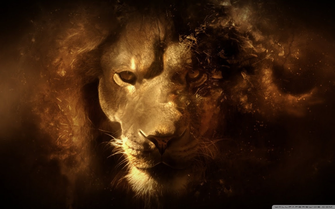 Lion Wallpaper Desktop Hd
