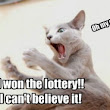 Weird Lottery Prizes - It's Not About the Money | Lottery Pros