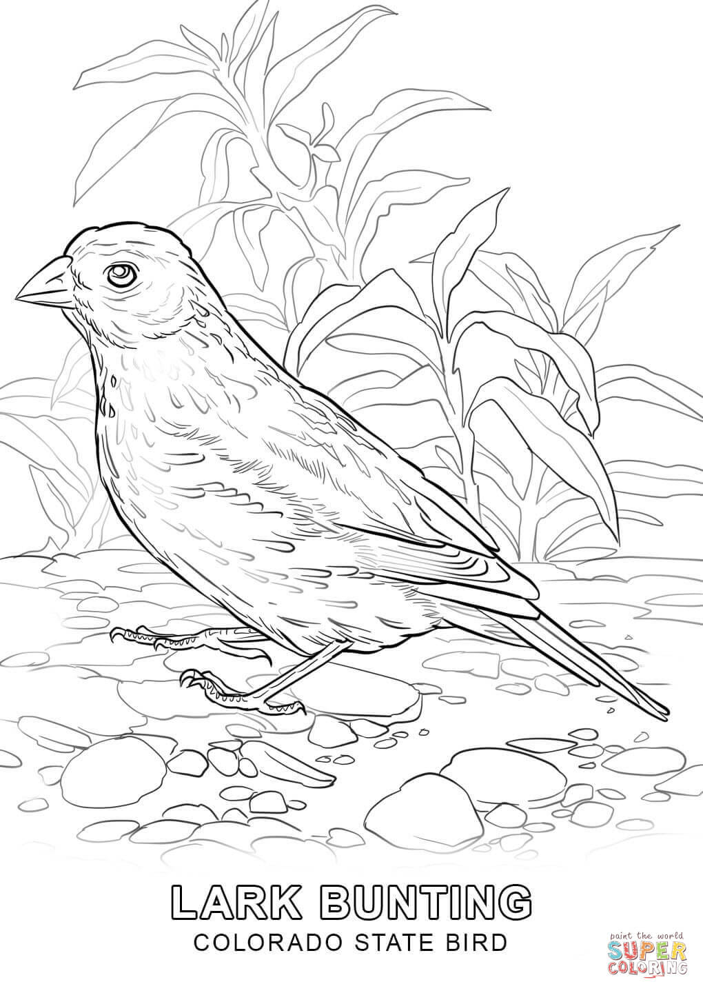 Florida coloring pages | Free Coloring Pages | 1440x1020