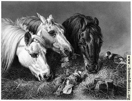 Horses eating a scanty meal
