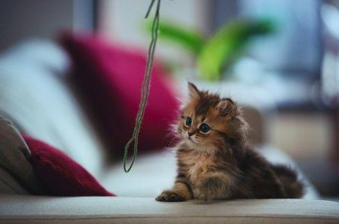 The World's Cutest Little Kitten! 13 Pics!