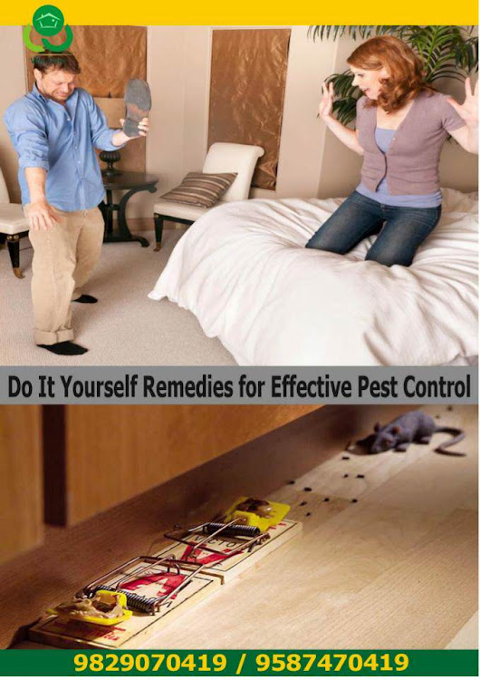 Do_it_Yourself_Remedies_for_Effective_Pest_Control