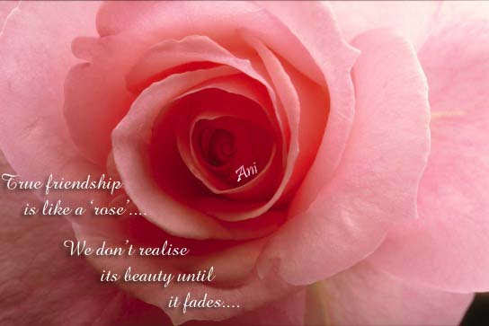 True Friendship Is Like A Rose Friendship Quote Quotespicturescom