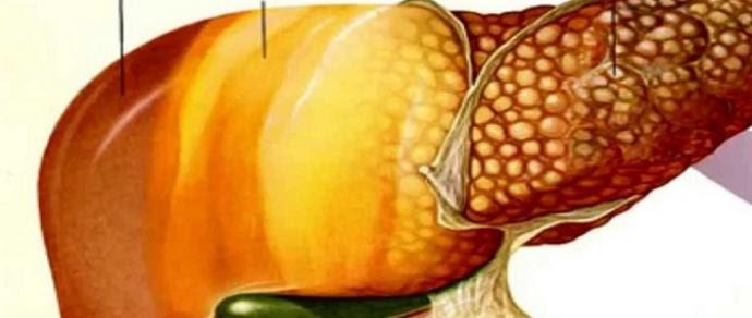 Resultado de imagem para Figado gordo dente de leão lima da pérsia fotos