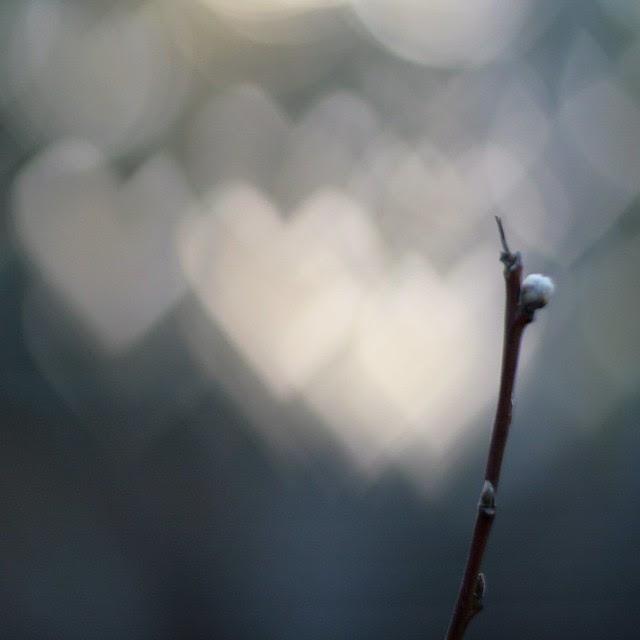 almond branch with heart bokeh