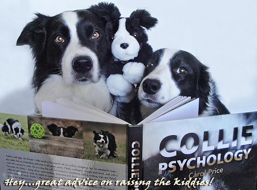 Border Collie Psycology and Carol Price