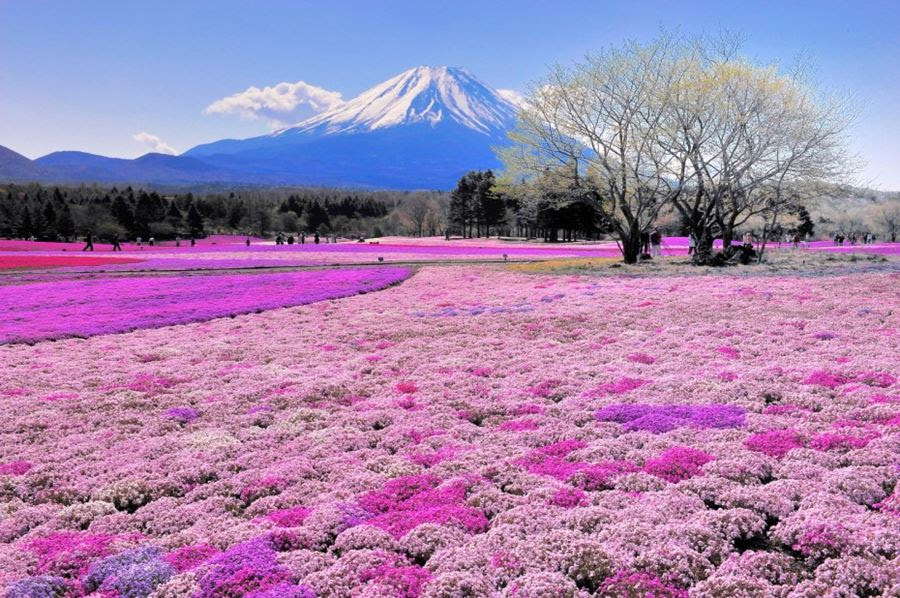 Όρος Fuji, Ιαπωνία