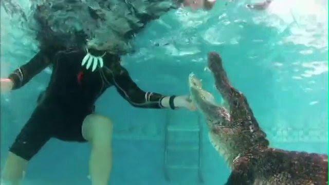 Gator Boys: βγάζουν αλιγάτορα έξω από πισίνα!