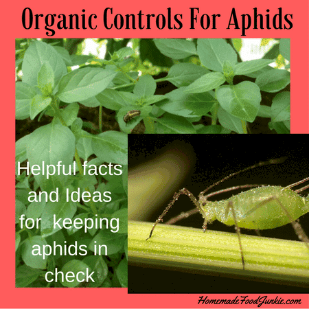 Organic Controls For Aphids | Homemade Food Junkie