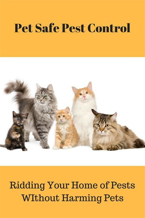 Pet Safe Pest Control: Get Rid of Pests Without Harming Pets   Fully Feline