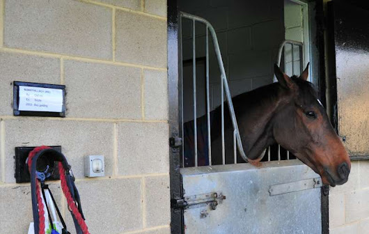 No Joy For Sunnyhillboy - He Will Miss The 2014 Grand National