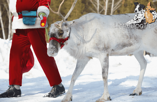 Santa Uses Reward-Based Training: An Essay Based On Five Points Of Evidence - Little Dog Tips