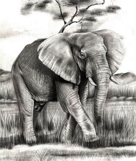 excellent elephant drawings  inspiration hative