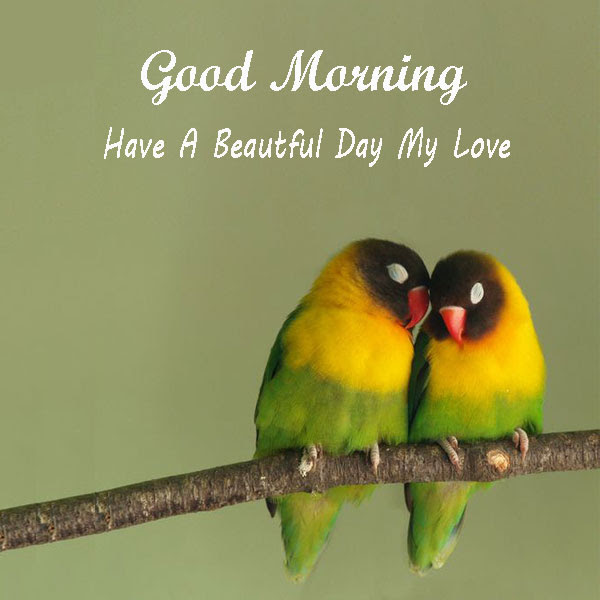 Good Morning Have A Beautiful Day My Love Birds Wishes Images Good