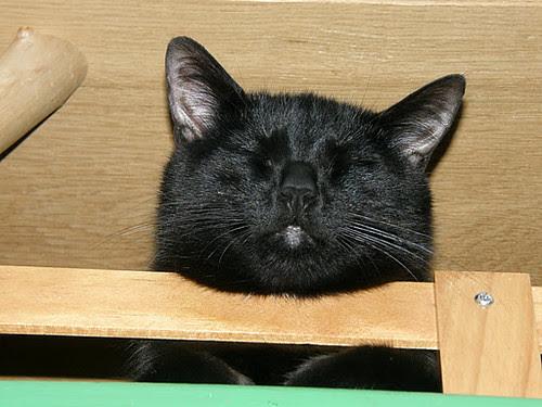 Sleeping on the catwalk