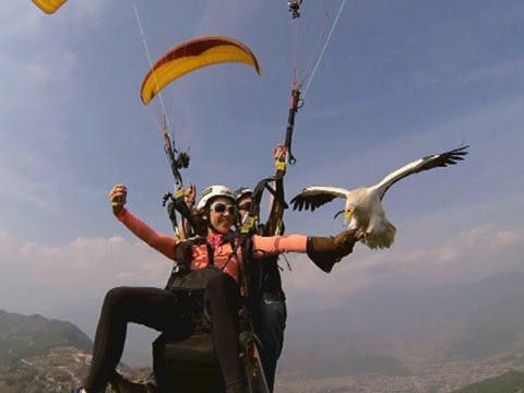 PARAHAWKING - Parahawking on ABC News Nightline