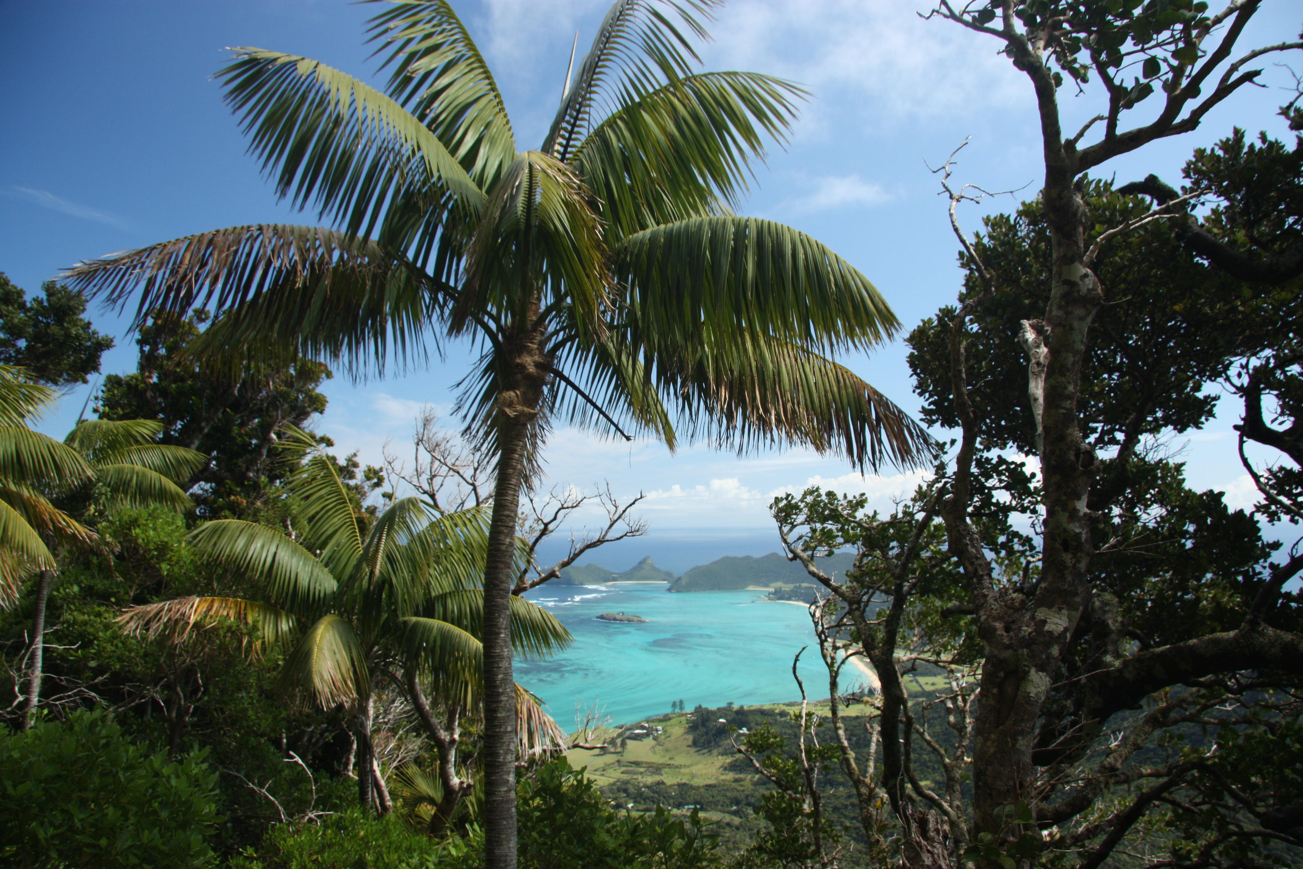 Unlocking The Secrets Of Lord Howe Island Banyans National Geographic Society Newsroom