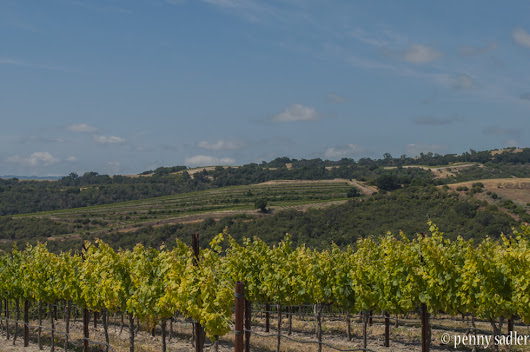 The Wine Road Leads To Lodi, California - Adventures of a Carry-On