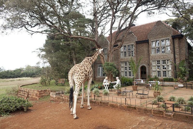giraffe manor hotel nairobi kenya africa safari (12)