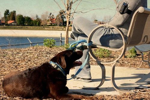 I love my dog version of bench monday