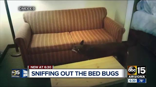 Bed bug dog companies are working to sniff out the insects before infestation