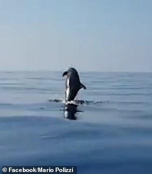 Una madre delfín tiene el mayor gesto de gratitud con los pescadores que salvaron a su bebé