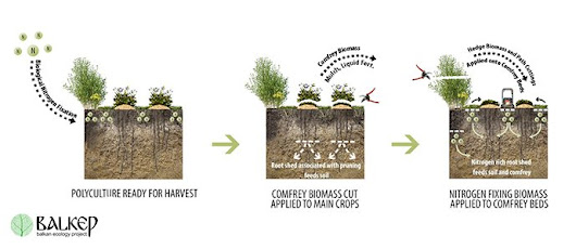 Perennial Polycultures - The Biomass Belt: Fertility Without Manure - The Permaculture Research Institute