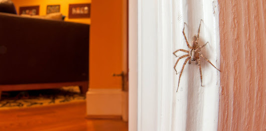 Should I kill spiders in my home? An entomologist explains why not to
