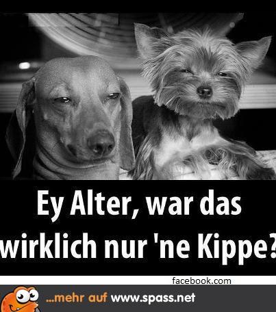 Hunde Bilder Mit Lustigen Spr Hen Spruch Website