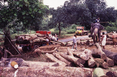 Felling of trees near Bisle in Hassan District's Sakleshpur taluk. The region around Netravathi basin has already been impacted due to the increasing human population