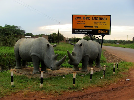 Every Rhinoceros Matters, Whether #JustOneRhino or Another - The Travel Word