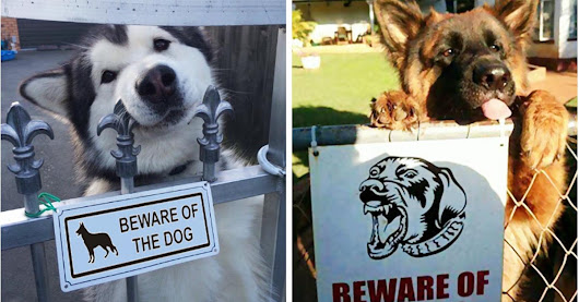 "15 Most Dangerous Dogs Behind ""Beware of Dog"" Signs"