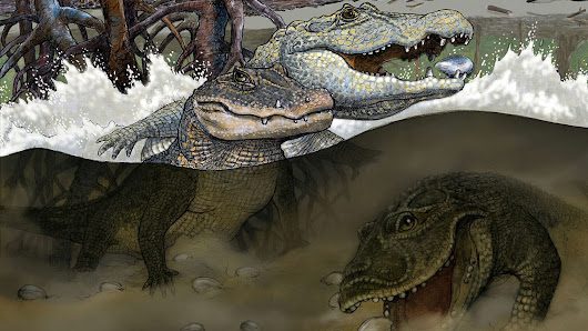 Meet an adorable ancient crocodile that had dental problems and a taste for mollusks