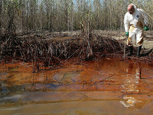 Phil Radford of Greenpeace USA inspects oil-covered reeds along the Gulf of Mexico.