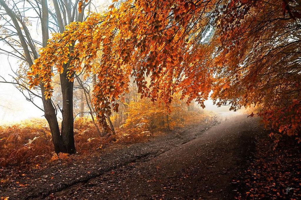 Os bosques outonais oníricos de um fotógrafo tcheco 18