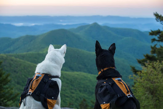 Dog Vacations | Official Visitors Guide of Haywood County, NC
