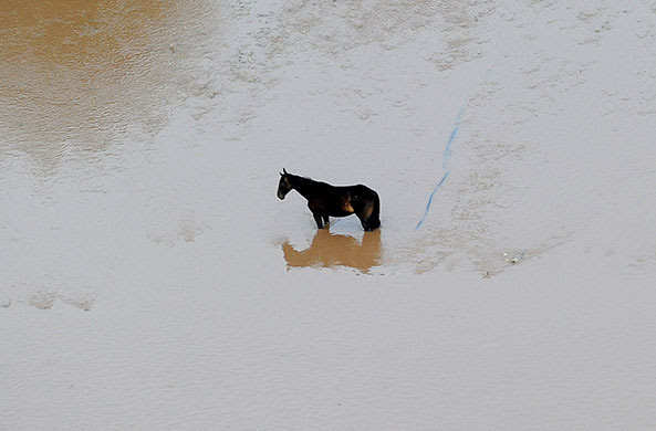France Floods: Puget-sur-Argens: A horse stranded in water in the aftermath of floods